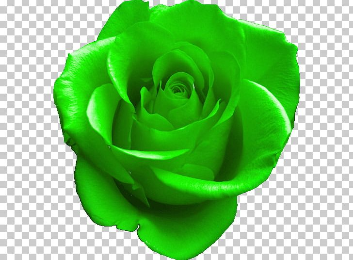 GIF Rose Green PNG, Clipart, Animated Film, Black Rose.