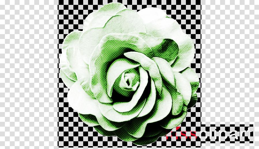 Garden roses clipart.