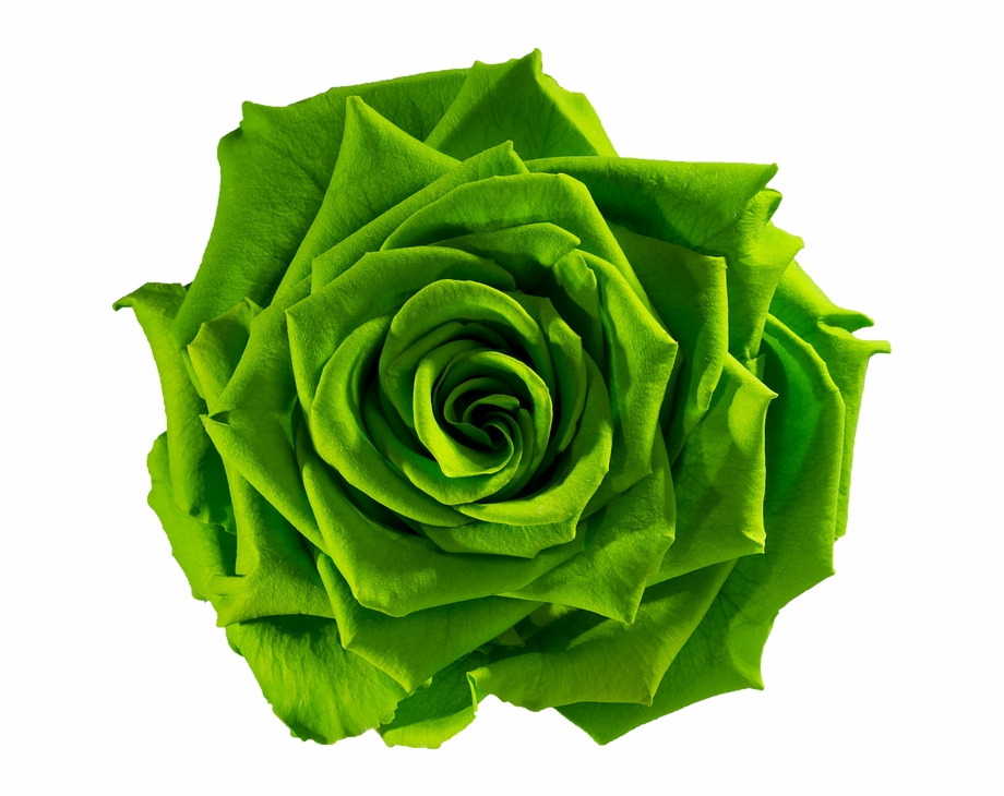 Green Rose Png Portable Network Graphics.
