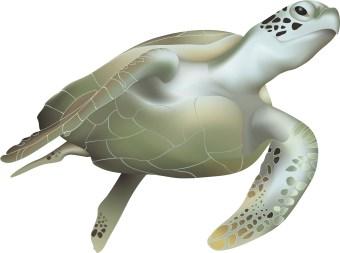 Sea turtles clip art.