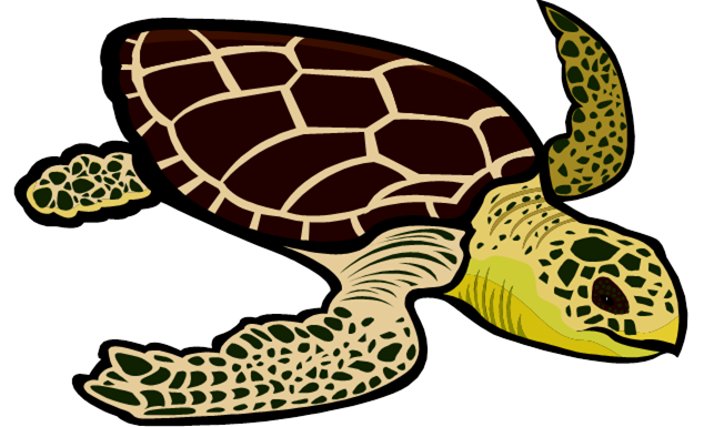Green sea turtle clipart.