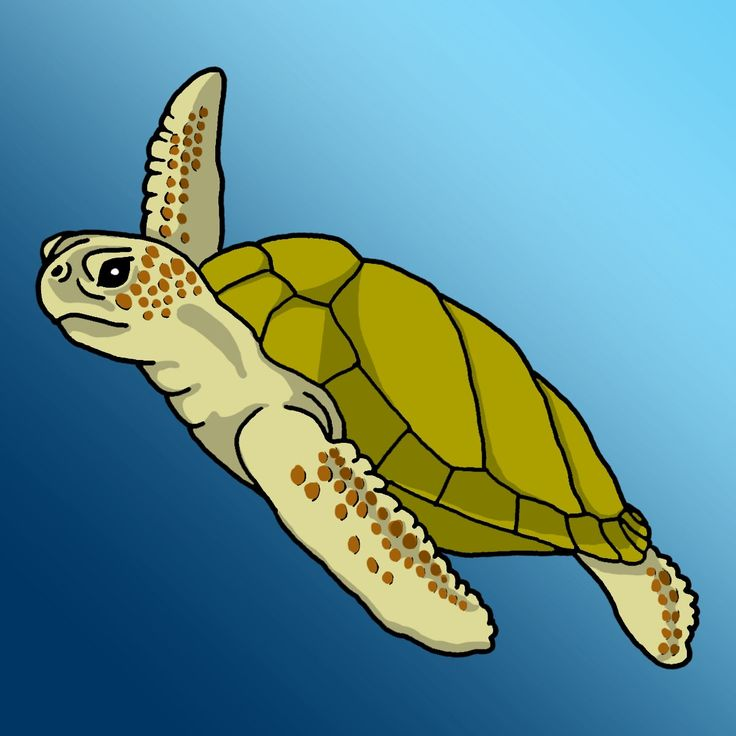 Loggerhead Sea Turtle Clipart.
