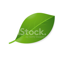 Green Sheet on A White Background stock vectors.