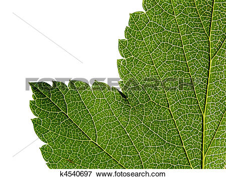 Picture of green sheet tree k4540697.