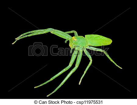 Stock Photos of Green spider 3.