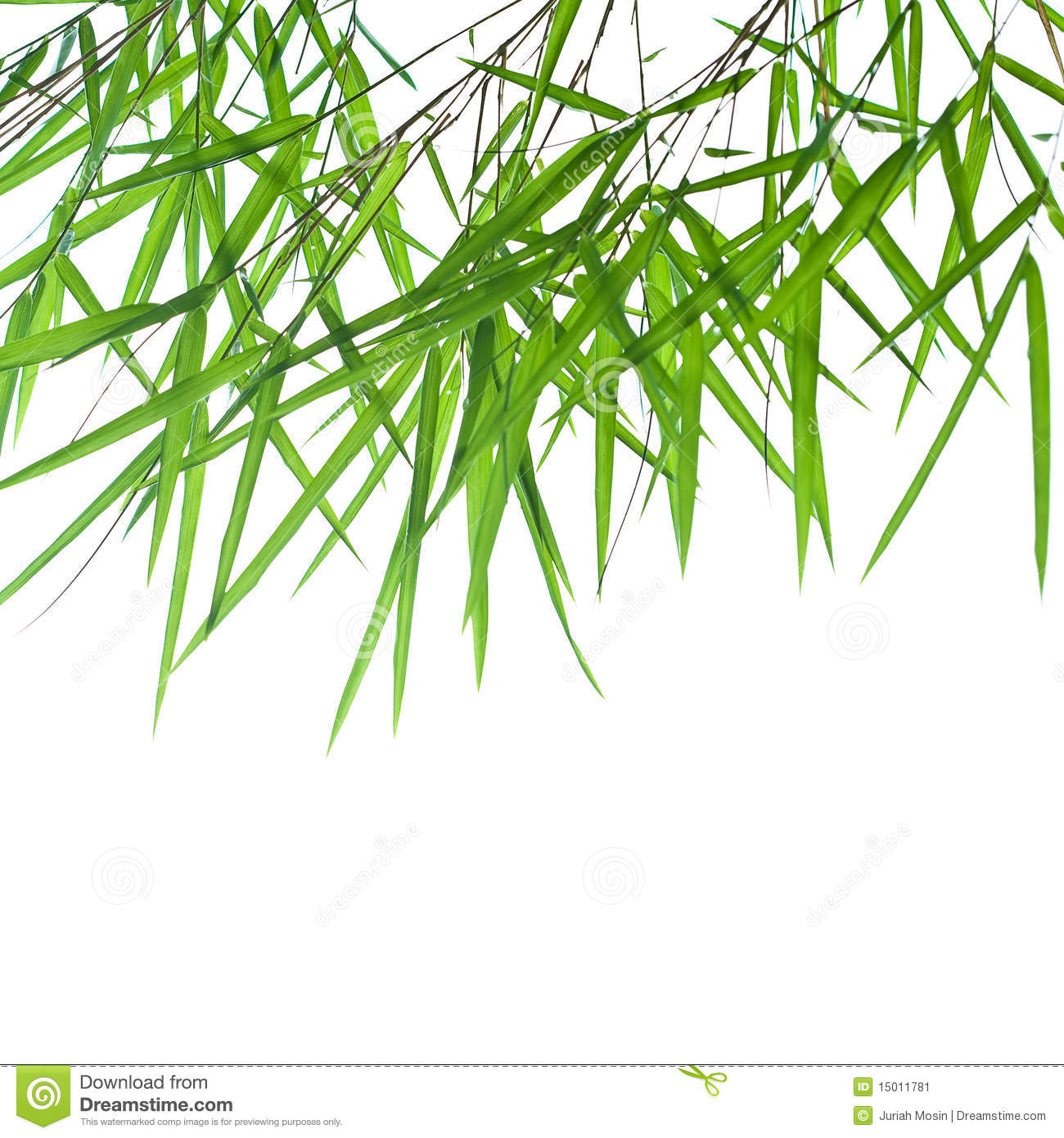 Stems Of Beautiful Green Bamboo Leaves Stock Image.