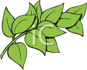 Green Leaves Images.