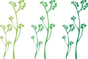 Gallery For > Plant Stem Clipart.