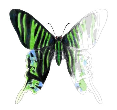 748 Swallowtail Stock Vector Illustration And Royalty Free.