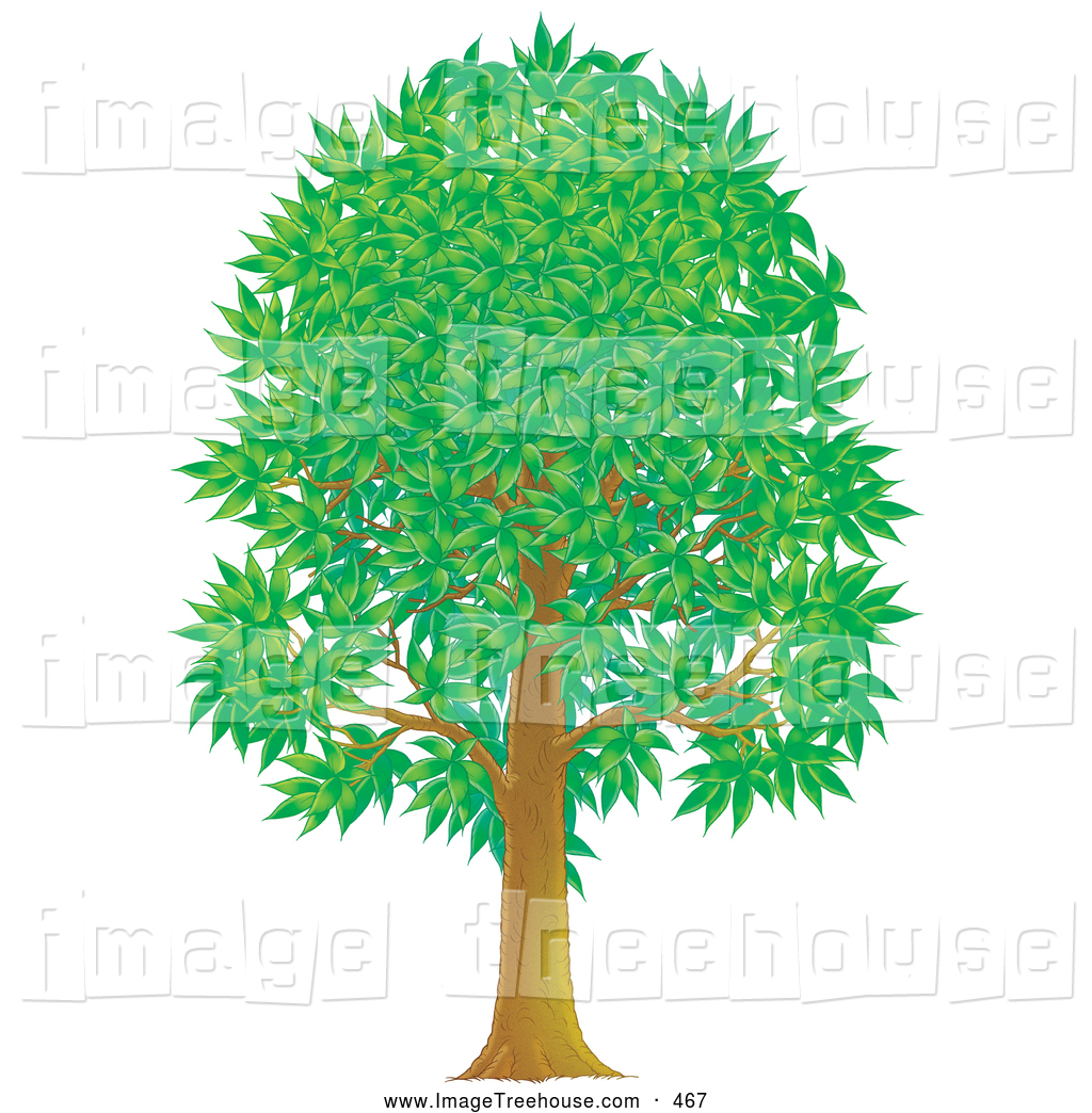 Clipart of a Tall Growing Green Park Tree with Summer or Spring.