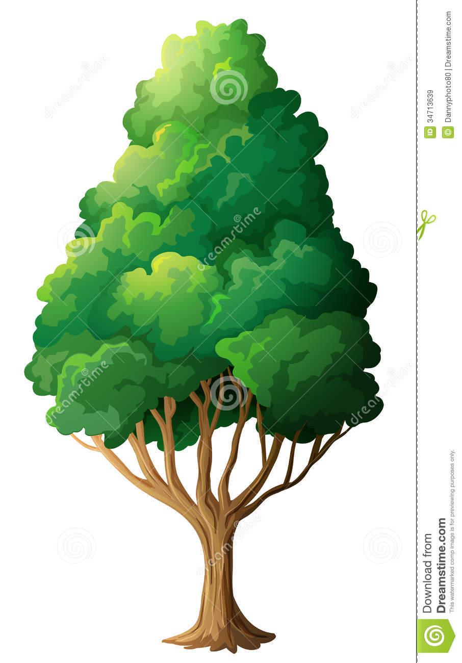 Clipart tall tree.