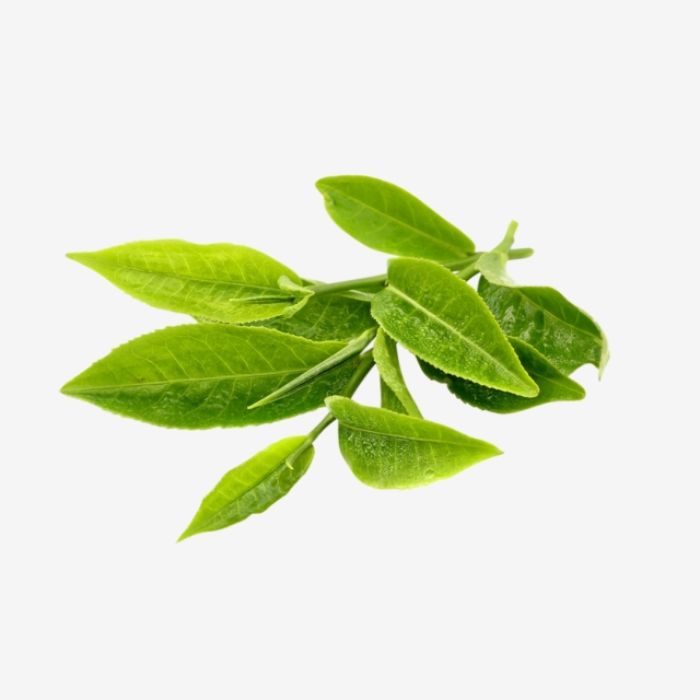 Tea Leaf Png, Vector, PSD, and Clipart With Transparent Background.