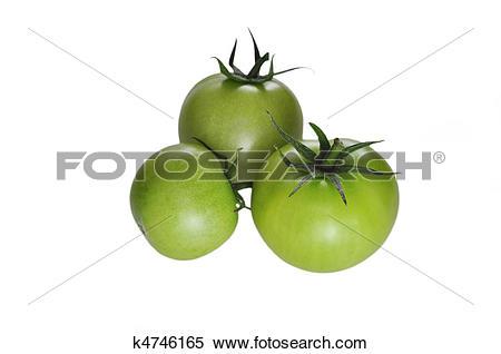 Stock Illustration of green tomato k4746165.