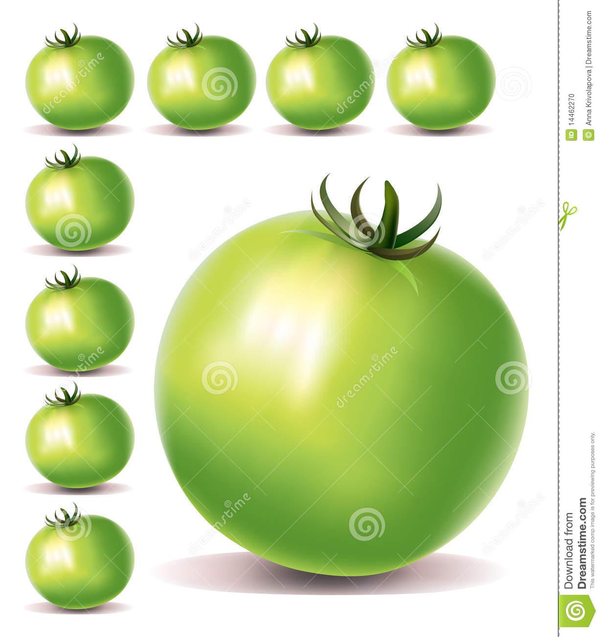 Green Tomatoes Stock Photo.