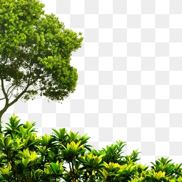 green tree png #3