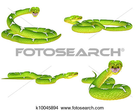 Drawings of Green Tree Python Pack k10045894.