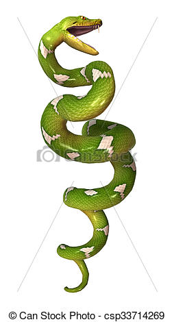 Stock Illustration of Green Tree Python on White.