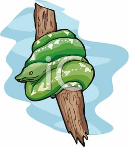 Snake Wrapped Around A Tree Branch.