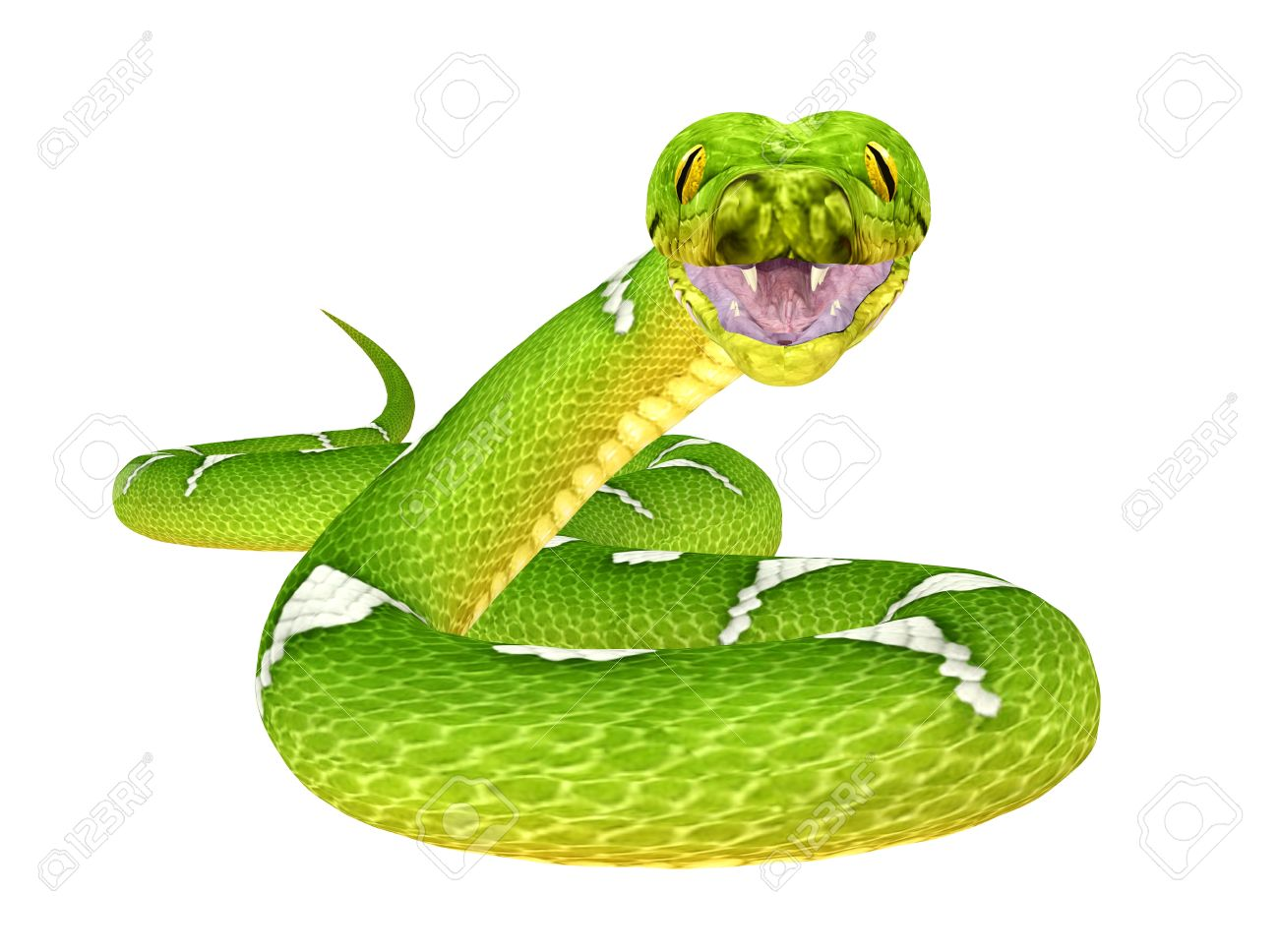 Illustration Of A Green Tree Python Snake Species Isolated.. Stock.