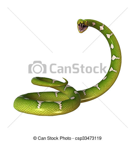 Clipart of Green Tree Python on White.