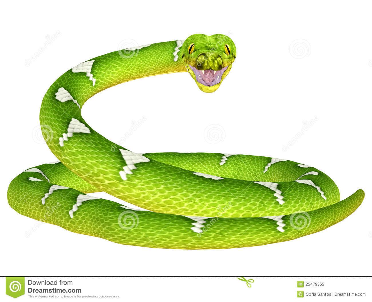 Green Tree Python Stock Illustrations.