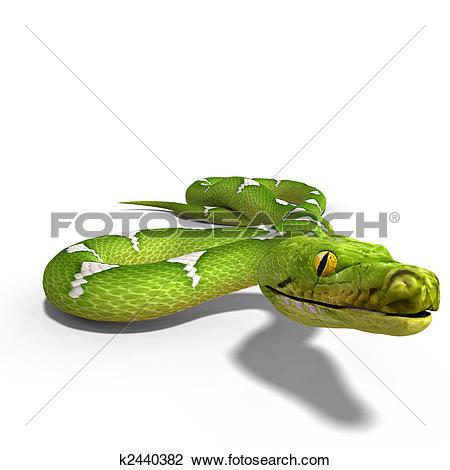 Clip Art of green tree python k2440382.