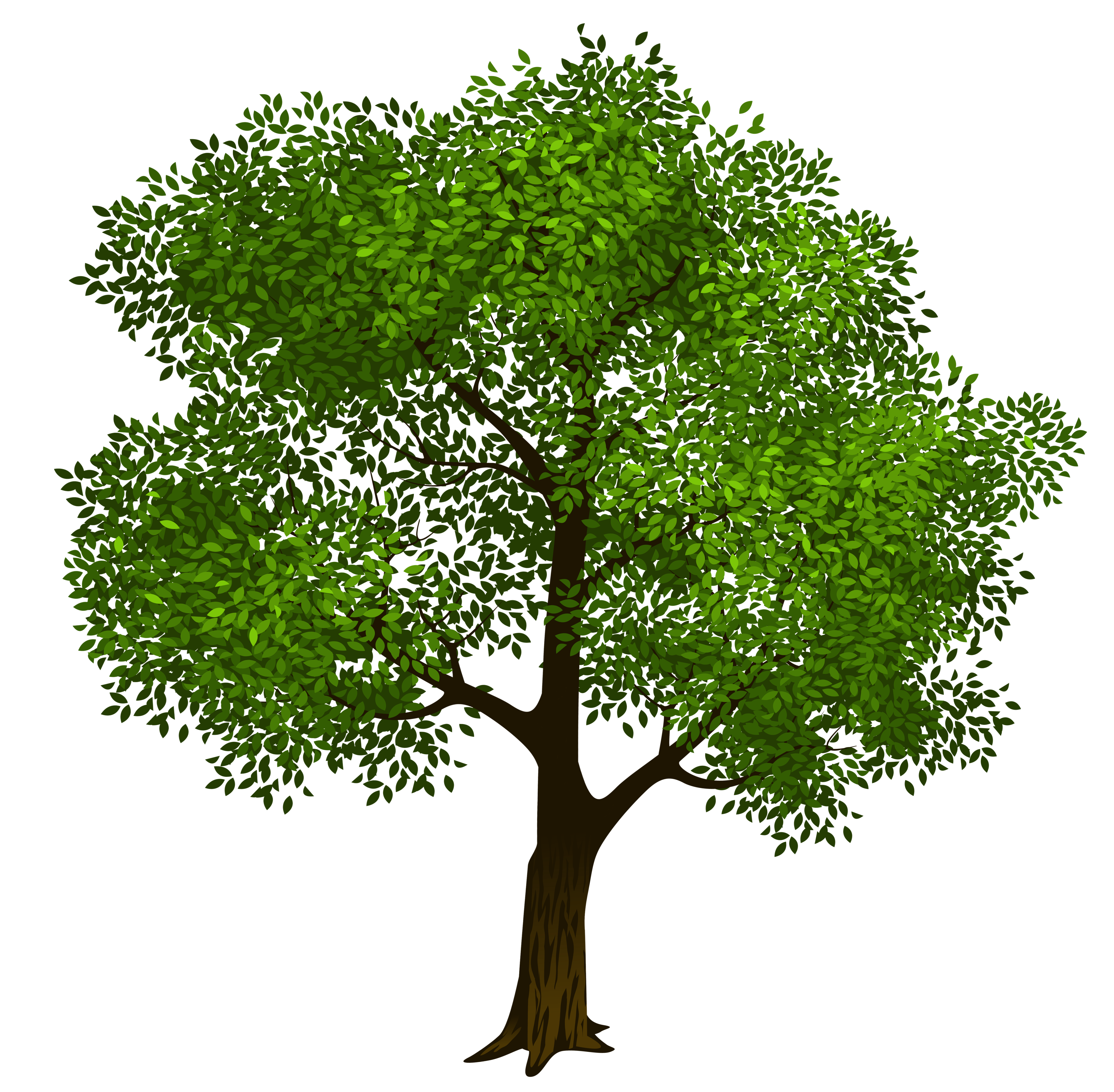 transparent tree clipart - Clipground