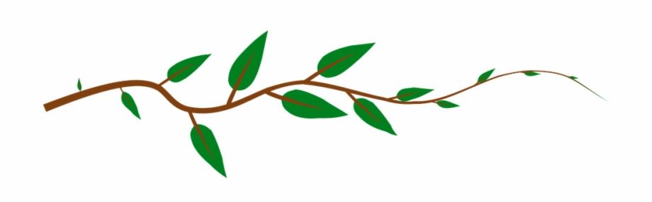 Vine Leaves Green Plant.