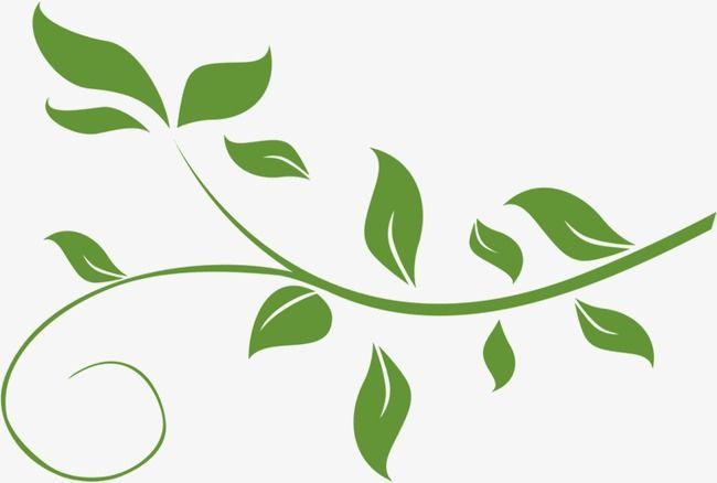 Fresh Green Leafy Vine Leaves, Vine Clipart, Fresh, Green Vine PNG.