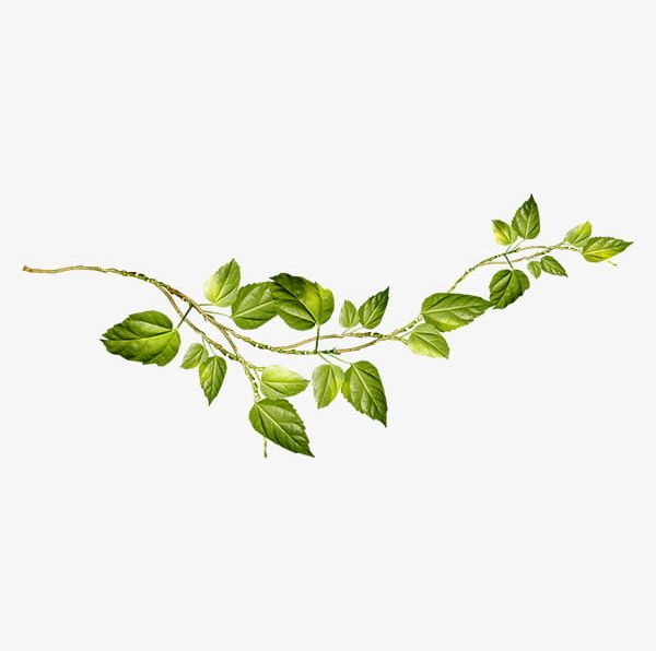 Creative Green Vines PNG, Clipart, Branch, Branches.