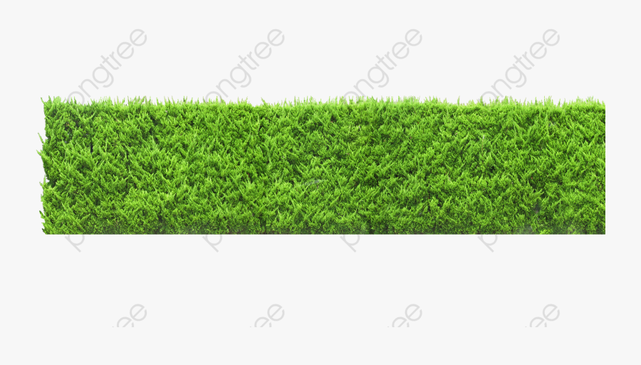 Plants Wall, Plants Clipart, Green, Wall Png Transparent.