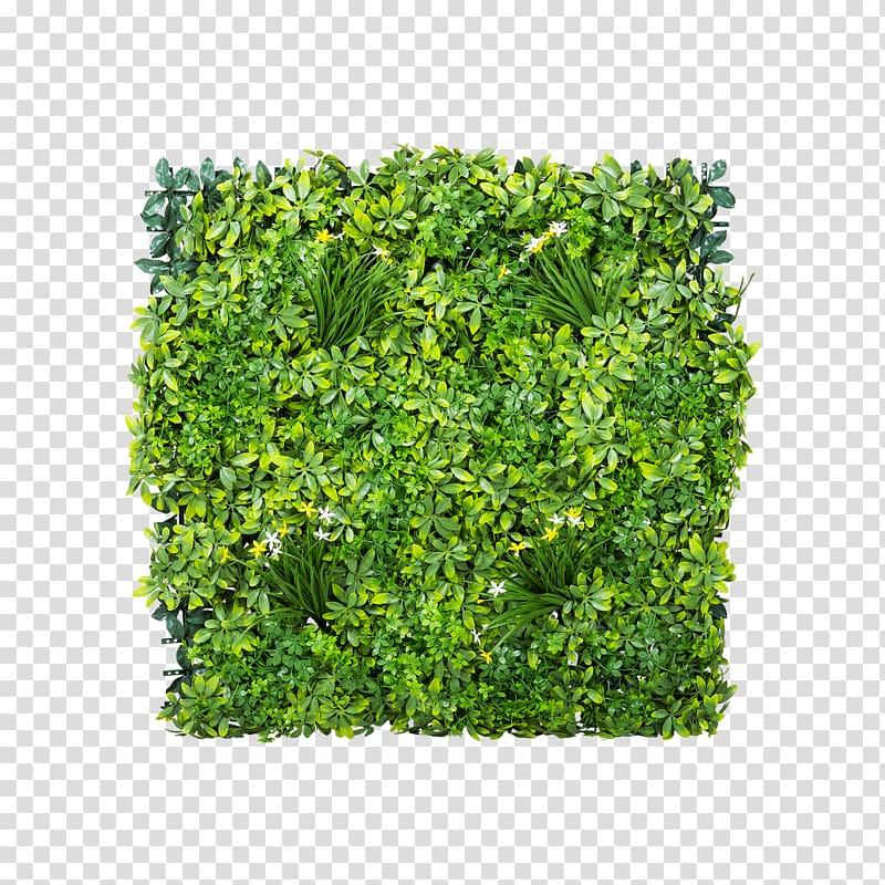 Gardening Shrub Green wall Lawn, others transparent.