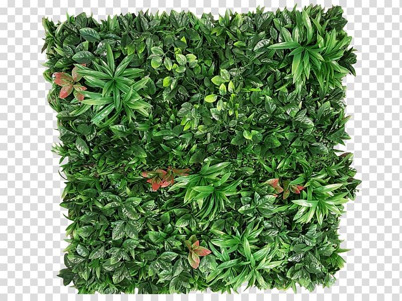 Green grass, Plant Green wall Garden Shrub, greenery.
