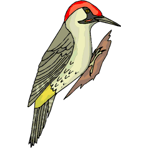 Woodpecker Clipart.