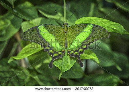 """green Banded Swallowtail Butterfly"""" Stock Photos, Royalty."""