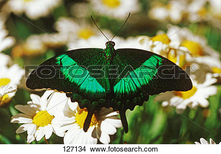 Stock Photo of green.