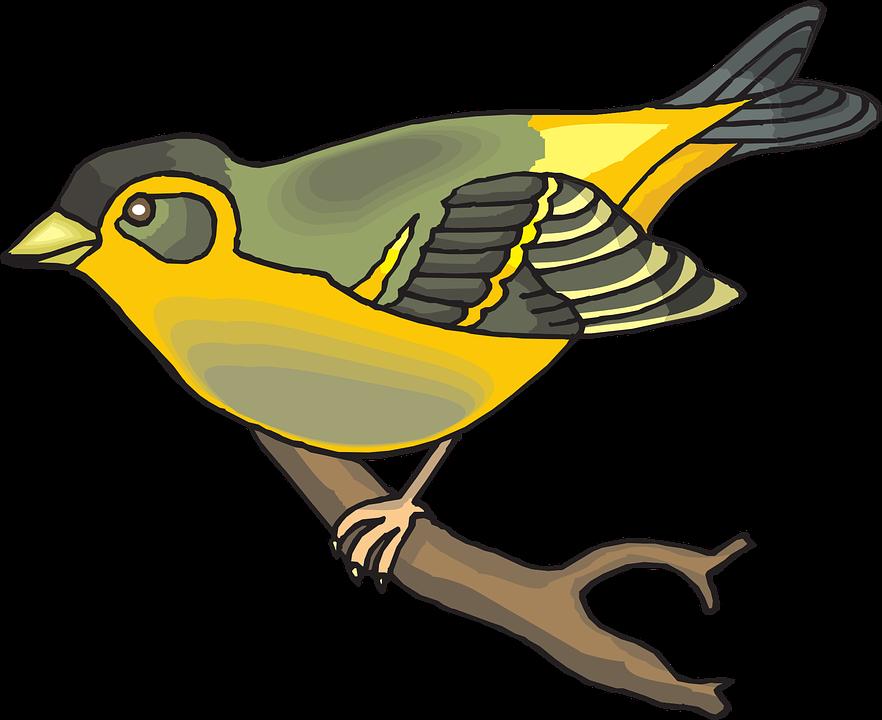 Free vector graphic: Bird, Branch, Wings, Beak.