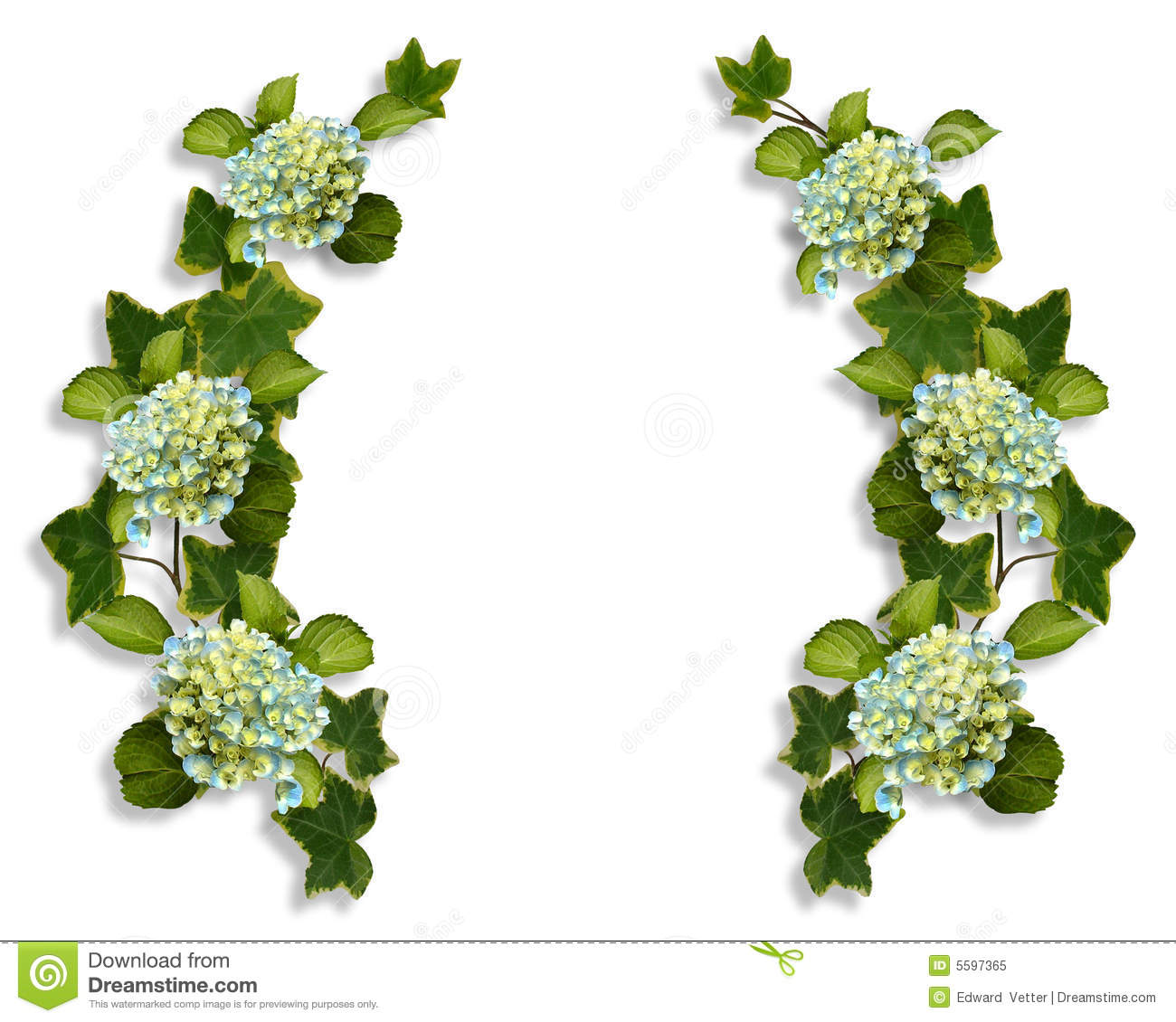 Green hydrangea clipart.