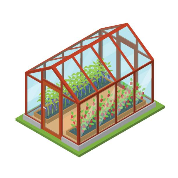 Greenhouse with Flowers and Plants Isometric View. Vector.