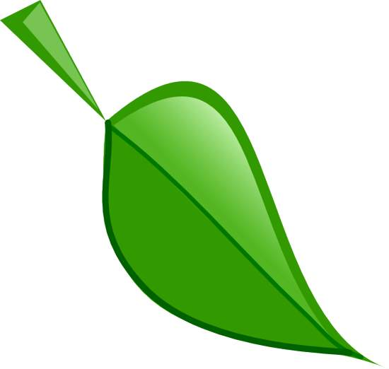 Green leaves clipart png.