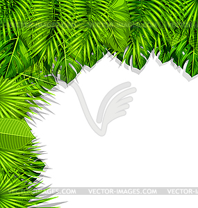 Nature Background with Green Tropical Leaves.