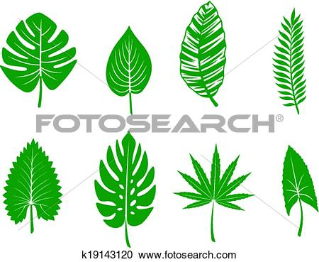 Clipart of Green tropical leaves k19143120.