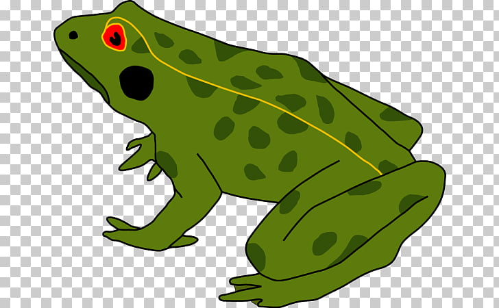 Frog Amphibians Tadpole Cane toad Human body, grenouille.