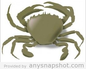 How To Draw A Crab.