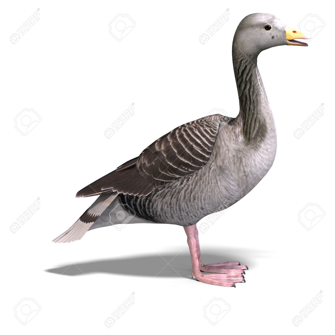 3D Rendering Of A Grey Goose Stock Photo, Picture And Royalty Free.