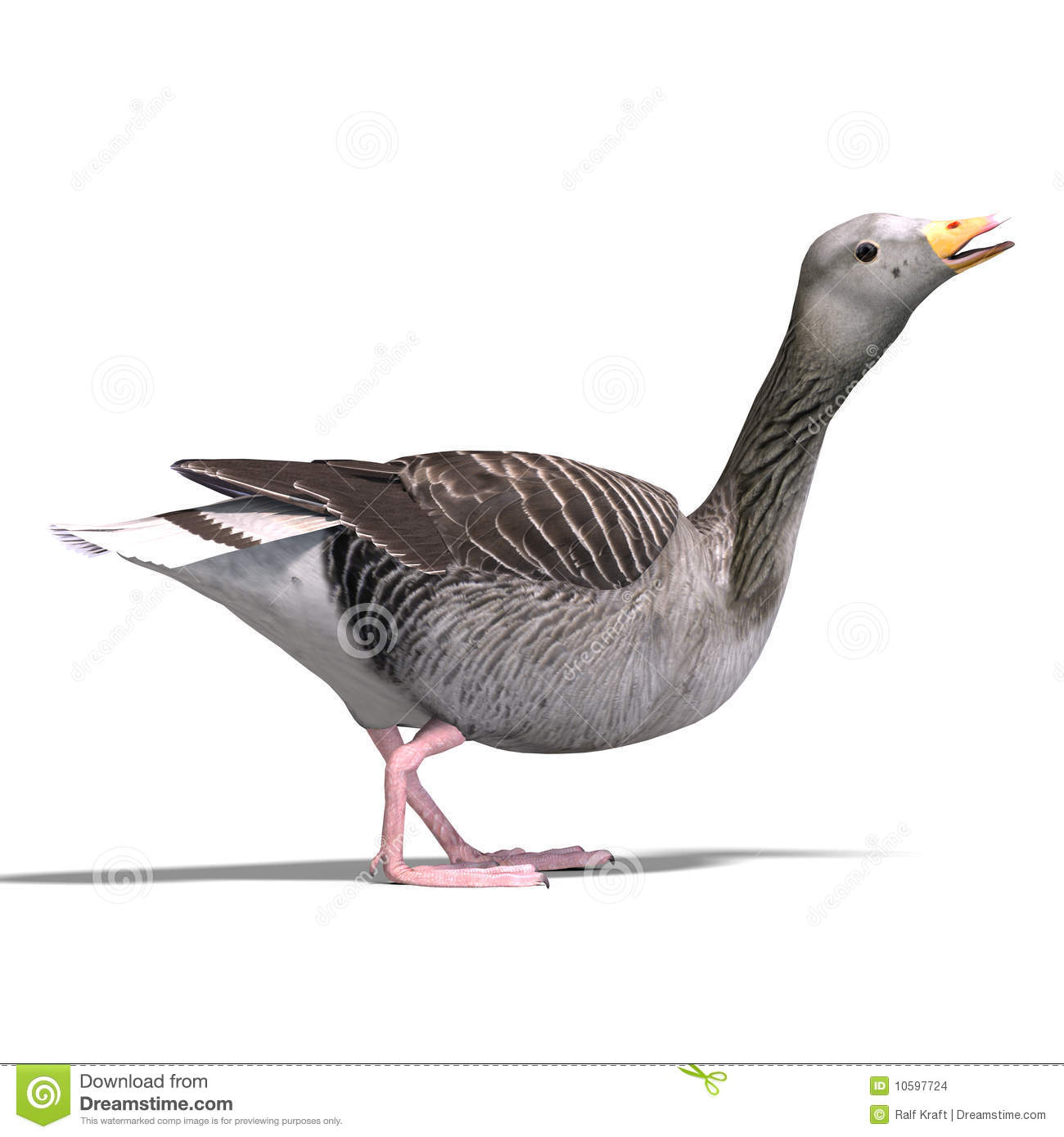 Grey Goose Stock Images.