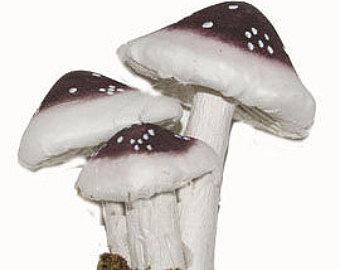 Brown mushroom.
