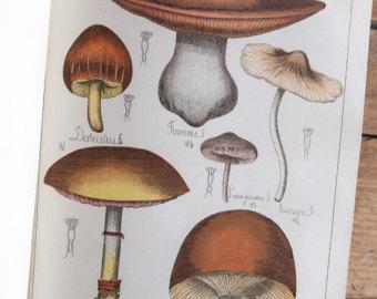 Mushroom engraving.