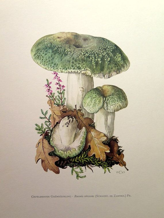 1000+ images about ToADsTooL LoVE on Pinterest.