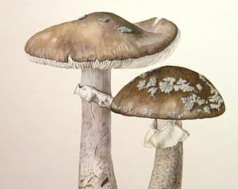 Mushroom lithograph.